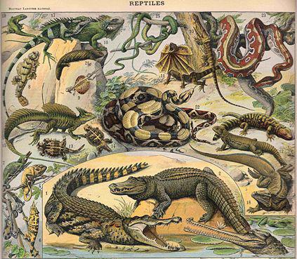 Рептилии w