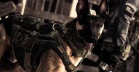 Call of Duty Dog.jpg
