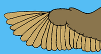 BirdWing.png