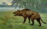 Hyaenodon Heinrich Harder.jpg