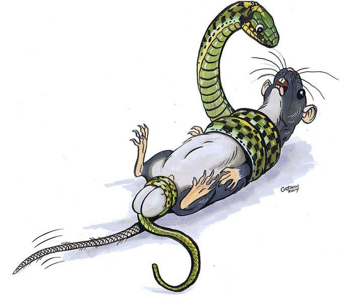 Картинки с прикольными змейками